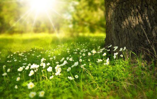 erboristeria erbetue primavera