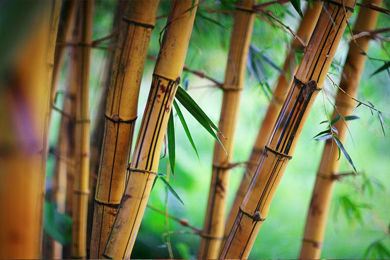 zao make up ingredients bambou