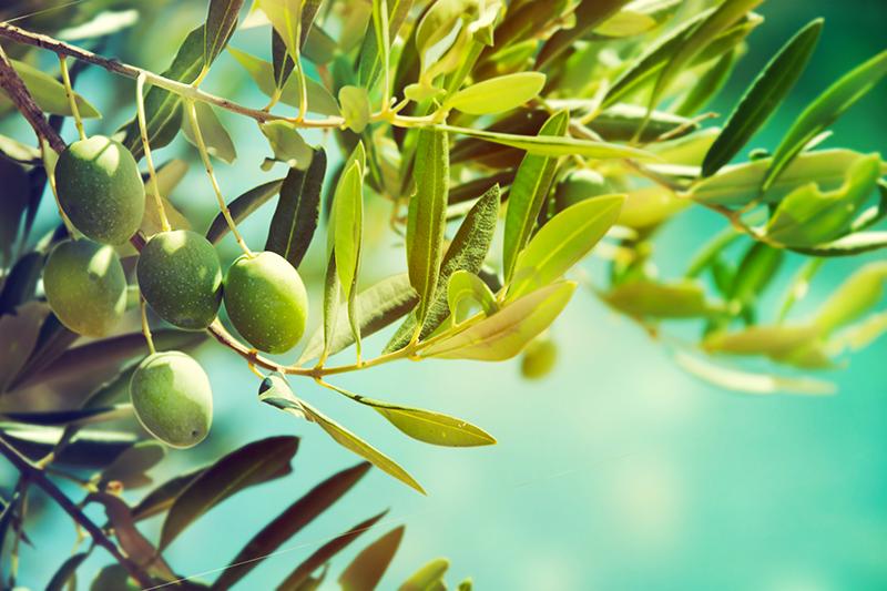 zao make up ingredients squalano vegetale olive bio